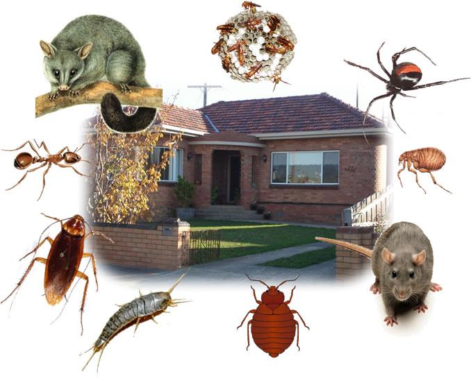 افضل شركة مكافحة حشرات بجدة شركة مكافحة حشرات بالرياض وبجدة شركة مكافحة حشرات بالرياض وجدة 18