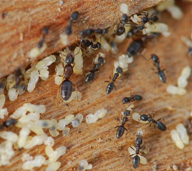 افضل شركة مكافحة النمل الابيض بجدة